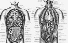 胃溃疡如何调理?